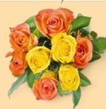 Rosen Rainbow