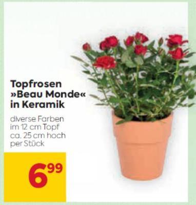 Topfrosen »Beau Monde« in Keramik in diversen Farben um € 6,99