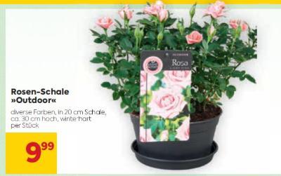 Rosen-Schale »Outdoor« in diversen Farben um € 9,99